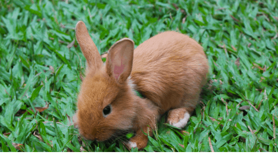 Ultimate Guide to Rabbit Foods 1